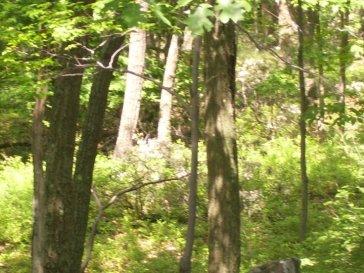 Even More Deer